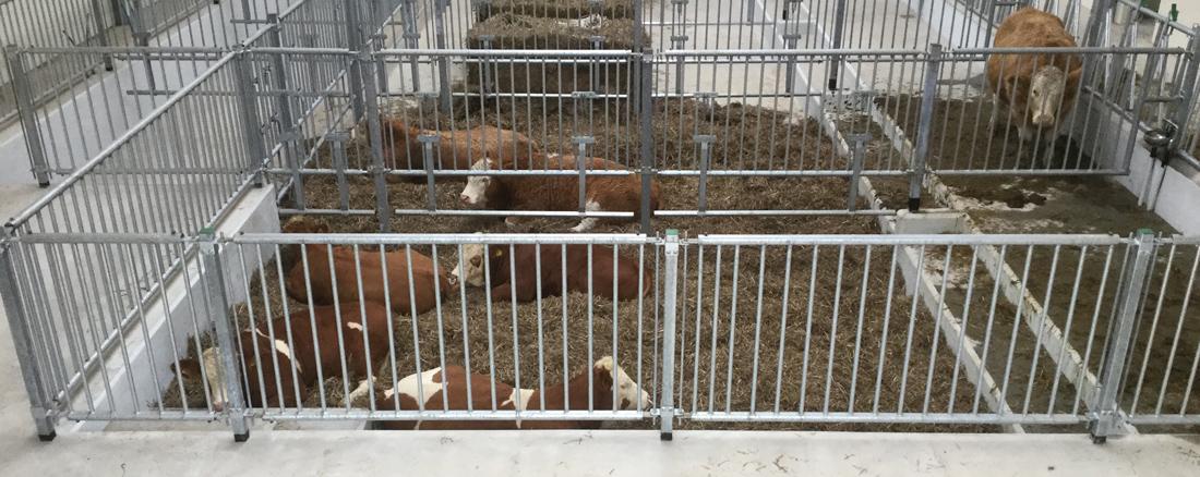 Kødkvægstald, Jerslev
